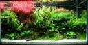 Régulateur d'éclairage et de température pour aquarium
